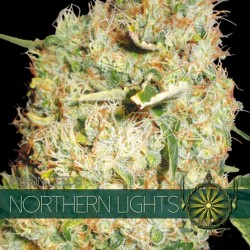 Northern Lights - Vision -...