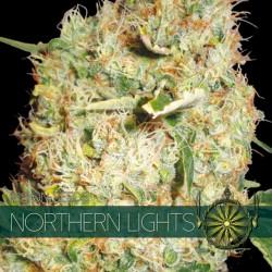 Northern Lights - Vision -...