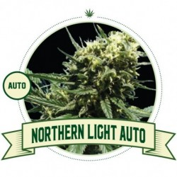 Northern Light Auto – 5...