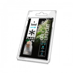 CBD LIFE PLANT MEDICAL 1 SEED