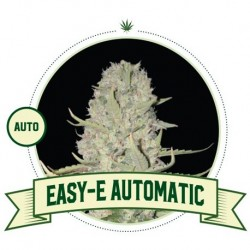 Easy-E FEM – 5 Seeds - City...