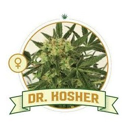 Dr Kosher Kush 5 Seeds FEM...