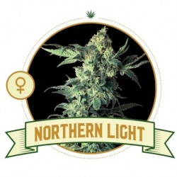 Northern Light FEM 5 Seeds...