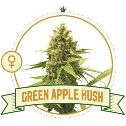 Green Apple Kush Fem 3 Semi...