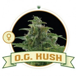 O.G Kush FEM 3 Semi - City...