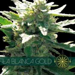 La Blanca Gold FEM 5 Seeds