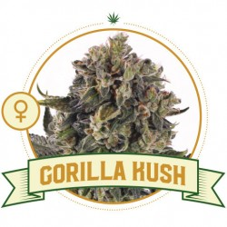 Gorilla Kush 3 Semi - City...