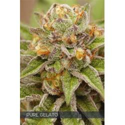 Pure Gelato FEM 5 SEEDS Vision