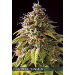 Caramel Monster FEM 5 SEEDS...