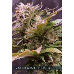 Vision Caramello 3 Seeds...