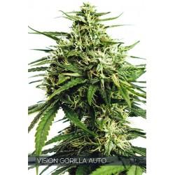Vision Gorilla 3 Seeds Auto...