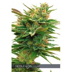 Nicole X OG 3 SEEDS FEM Vision