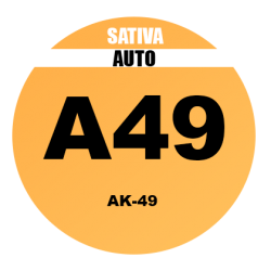 AK49 Fem - Bulk 100 Seeds