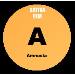 Amnesia Fem - Bulk 100 Seeds