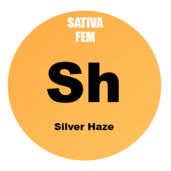 Silver Haze Fem - 100 semi