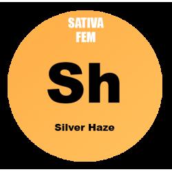 Silver Haze Fem - Bulk 100...