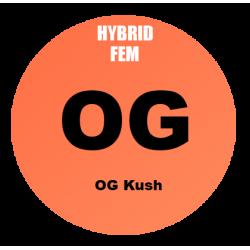 OG Kush Fem - Bulk 100 Seeds