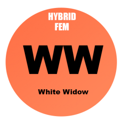 White Widow Fem - 100 semi