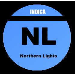 AUTO Northern Lights - 100...