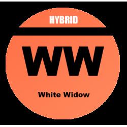 AUTO White Widow - 100 semi