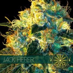 Jack Herer Fem (Vision) - 3...