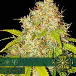 vision autofem ak49 semi di cannabis