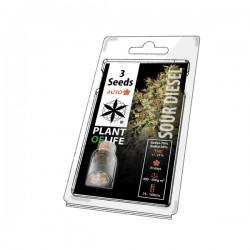 Sour Diesel Auto - 3 seeds...
