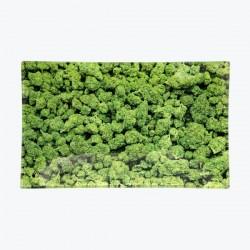 V-Syndicate Vassoio in Vetro grande con design Buds verde