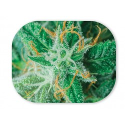 magnetic cannabis plant tray cover v-syndicate