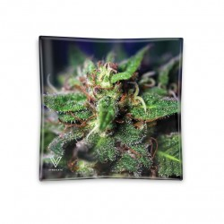 glass high quality ashtray for wholesale to growshops and headshops italy. Blue dream design
