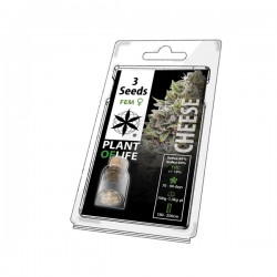 cheese 3 pack cannabis seeds for wholesale plant of life brand