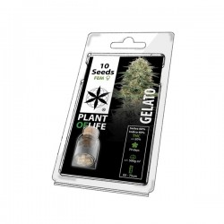 gelato plant of life wholesale cannabis seeds 5 pack for wholesale online