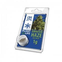 CBG pollen Hash amnesia haze wholesale plant of life