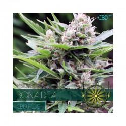 Bona Dea CBD 3 Seeds Med-...