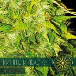 White Widow Autofem -...