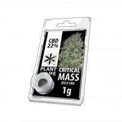 CBD Jelly 22% Critical Mass