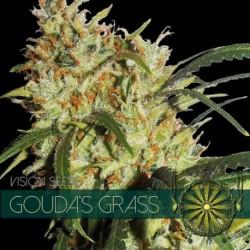 Goudas Grass  - Vision - 5...