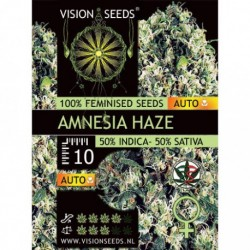 Amnesia Haze Auto - Vision...