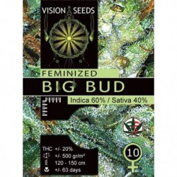 Big Bud 3 Seeds Fem - Vision -