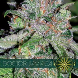 Doctor Jamaica 5 Seeds Fem...