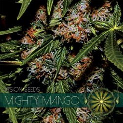 Mighty Mango Bud 5 Seeds...