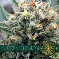 Supreme Lemon 5 seeds Fem -...