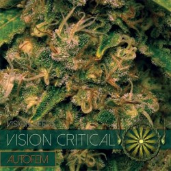 Vision Critical 10 Seeds...