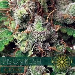 Vision Kush 5 Seeds AutoFem...