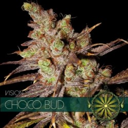 Choco Bud Fem - Vision - 5...