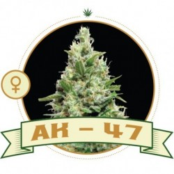 AK47 Fem 3 Semi- City Seeds...