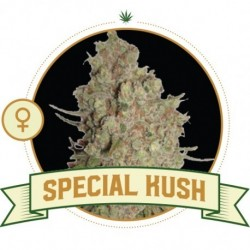 Super Skunk FEM - 3 Seeds-...