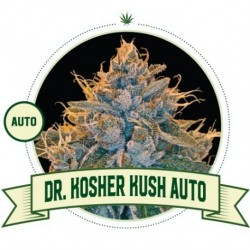 Kosher Kush Auto - 3 Seeds...