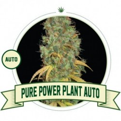 Pure Power Plant AUTO 3...