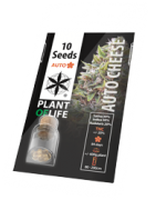 Auto Flowering Seeds | Plant of Life Wholesale